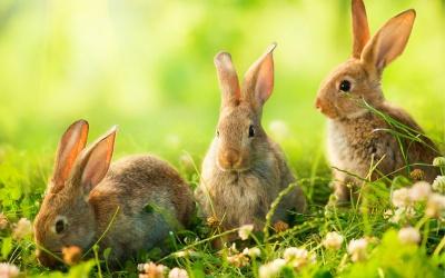 Góralska Wielkanoc